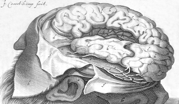 A 1614 Illustration of the brain by J .Voort Kamp